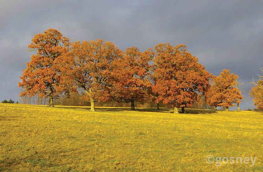 Large autumn colour 29